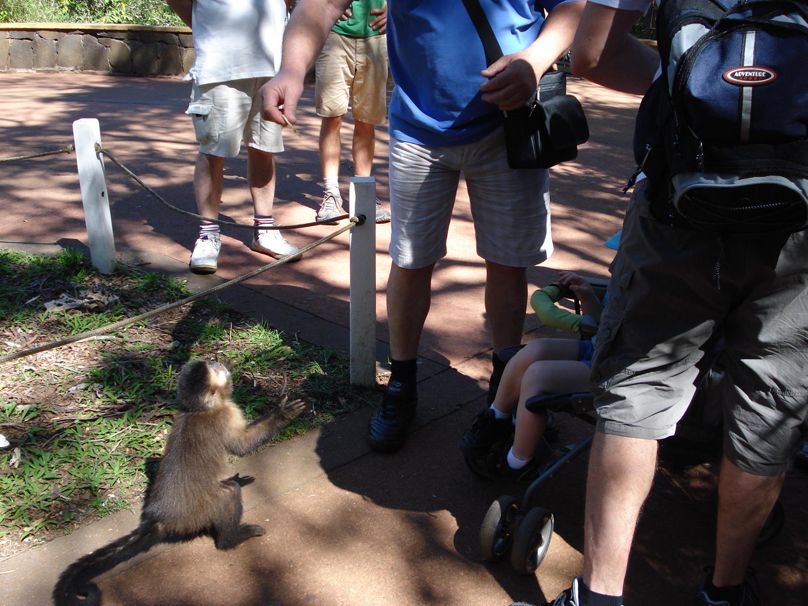 Monos y Turistas Mario 1